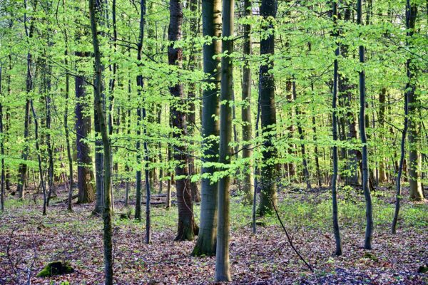 What is Shinrin Yoku? the art of Forest Bathing